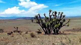 semidesierto Zacatecas
