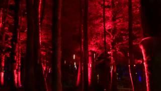 Enchanted Forest Dancing Lights