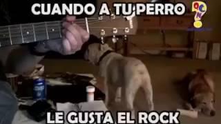 El perro rockanrolero