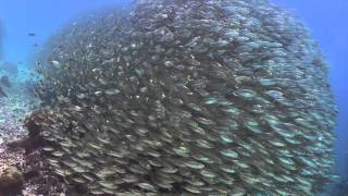 A day of diving in Raja Ampat