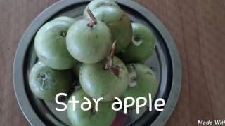 Best fruits in Guyana (Part 1)