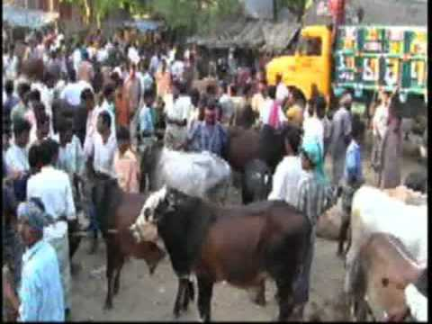 A Cattle market of Bangladesh