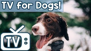 TV for Dogs & Anxiety Music  - Videos for Dogs to watch - Relax Your Dog Nature Footage (New 2018)