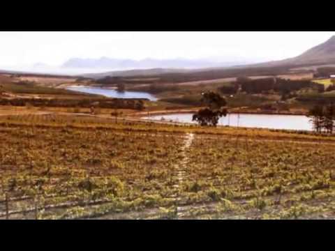 Hermanus – Western Cape – South Africa