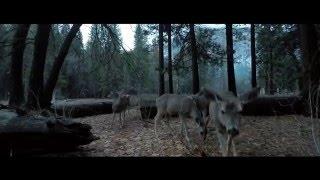 road trip: california + oregon + washington (tall heights - spirit cold) GoPro Hero4 Silver