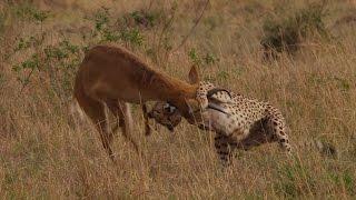 The exceptional hunter - Maleika - Die Königin von Afrika / The Queen of Africa