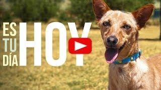 Hoy es el día más perro del Mundo