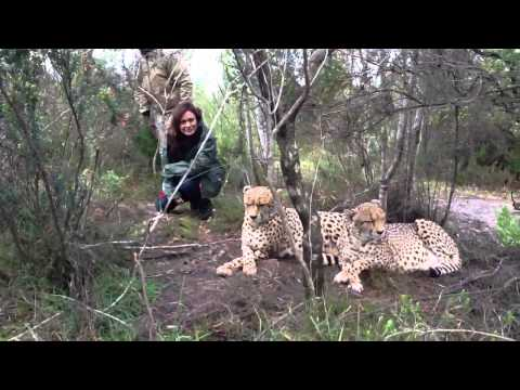 South Africa Trip – Walking With Cheetahs