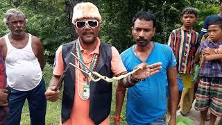 Bamboo Pit Viper Venomous Snake Snake rescue team Panchet dam (N G O)