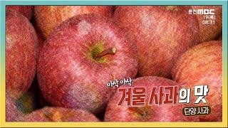 아삭 아삭 겨울 사과의 맛 다시보기