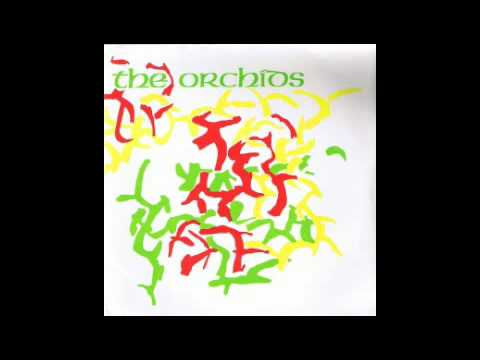 the-orchids-apologies-ayrton-gonzales