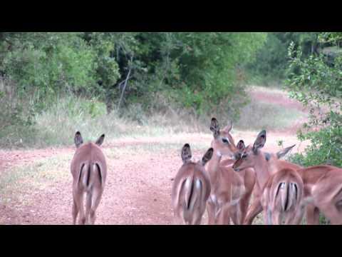 baby impala nursery South Africa 2012 242.MOV
