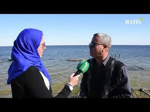 Video : L'art d'élever les huîtres à Dakhla