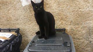 Bella coppia di gatti neri, a Santa Maria di Castellabate