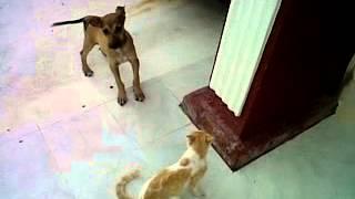 mi gato vs mi perro xD