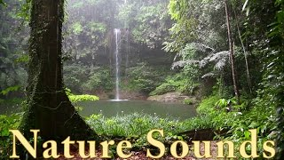 Relax 3 Minutes - Rainforest Animals, Waterfall and Rain Sounds