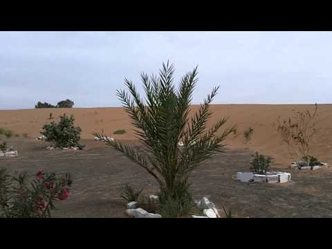 Sandtraining in den Dünen vom Erg Chebbie
