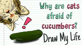 WHY CATS ARE AFRAID OF CUCUMBERS 🙀🥒 | Draw My Life Cat vs Cucumber