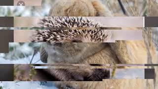 Dieren met geluid