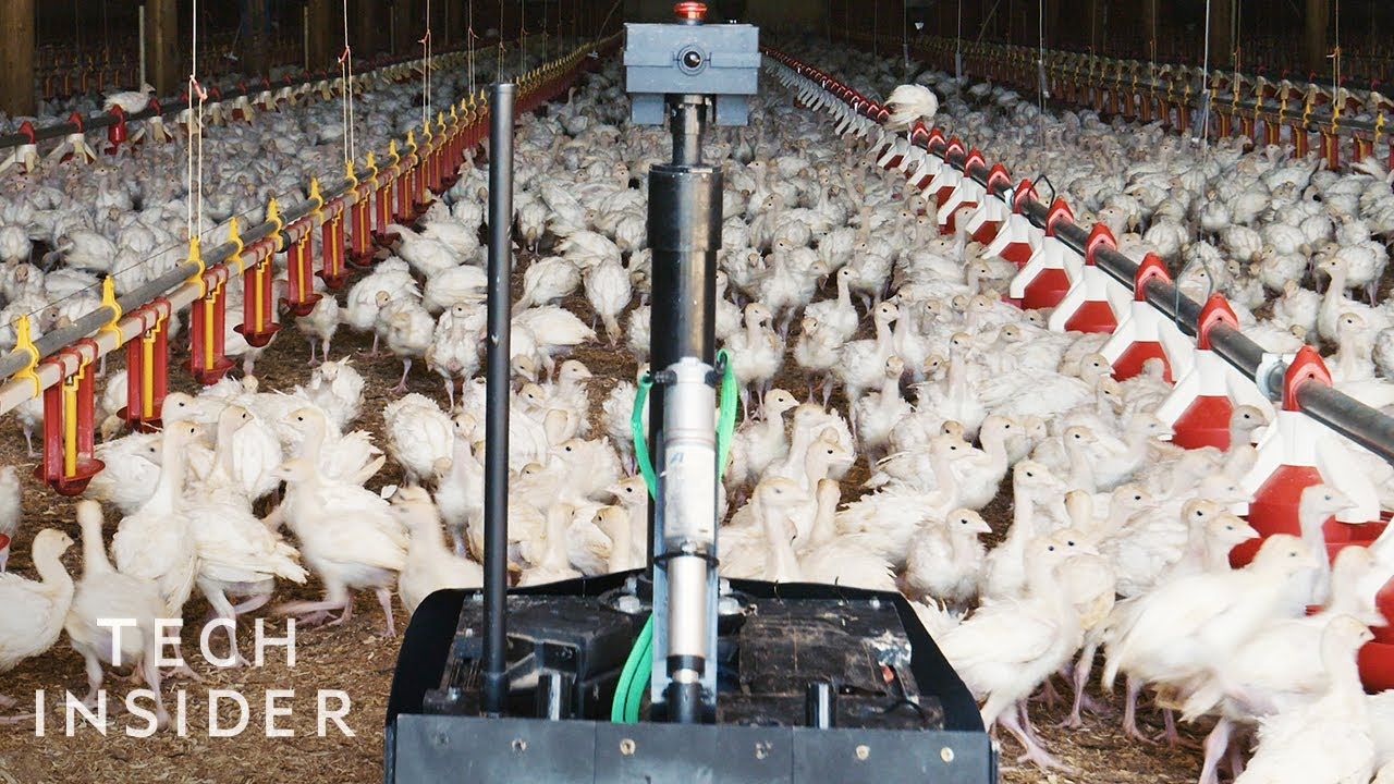 How a Four-Wheeled Robot is improving Poultry Farming in Minnesota