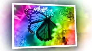 Dança das borboletas- Maria José Aliberti