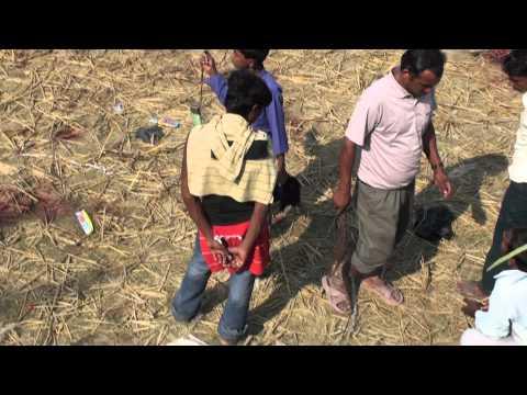 Gadhimai Festival – A Boy and his Goat Head (www.travelyourassoff.com)