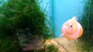 Fat Fish!