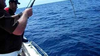 Clearwater Ft | St Pete Fishing Charters | Goliath Grouper