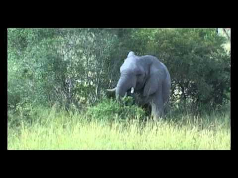 WONDERFUL SAFARI IN KRUGER NATIONAL PARK SOUTH AFRICA – PART ONE