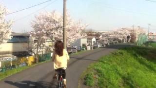 SaiDai Sakura Route #1 - Bicycling