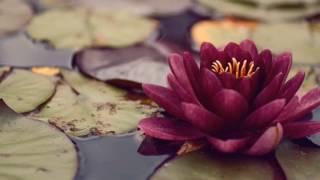 Purple Cloud - Lotus Blossom