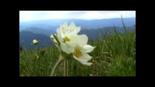 Relaxing Music Therapy - Relaxing Nature Scenes - Krížna  mountain HD