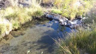 Keough Hot Ditch hot springs