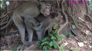 Monkey finding love but she don't love