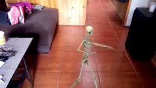 Esqueleto bailarín xd