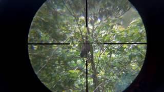 Tembak ayam hutan