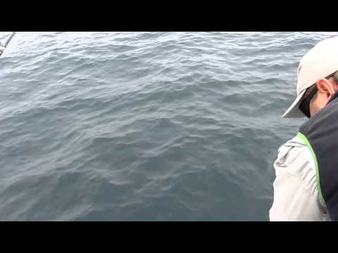 SOUTH AFRICA FISHING FOR CAPE FUR SEAL & SNOOK. PART15