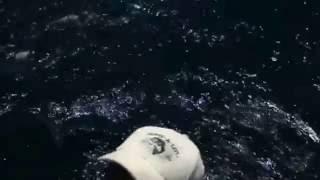 Striped Marlin Fishing with Bibi Fleet