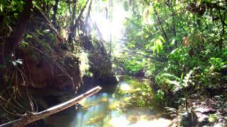 Hygieus - Primeval Forest