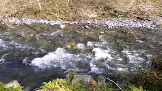 Rushing Mountain Creek Sounds