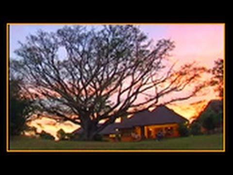 Hluhluwe Game Reserve :   Mtwazi Lodge