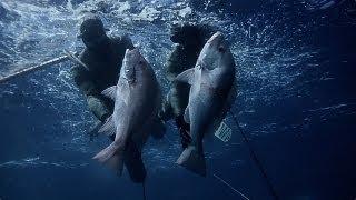 Spearfishing - Largemouth Nannygai