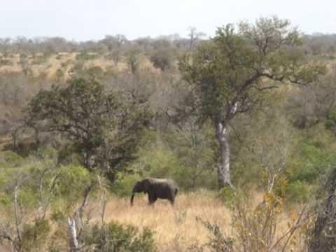 Słoń w Parku Krugera