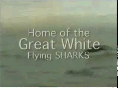 Great White Shark Breaching for Sea Lions | Jaws on the attack | shark week