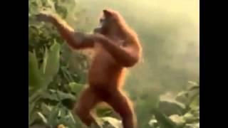 Dança do macaco hoje é sexta-feira