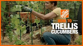 A video shows how to trellis cucumbers.