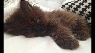 A menina que adotou um pequeno e doente gato, que acabou se tornando uma grande surpresa Depois