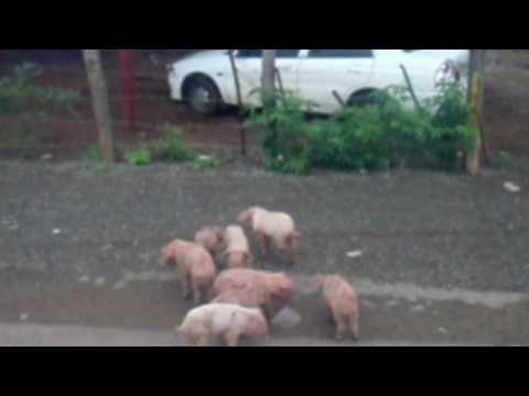Clips of a few of the Numerous Miscellaneous Animals in Nicaragua!
