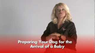 Jacinthe Bouchard - Preparing Your Dog for Baby's Arrival