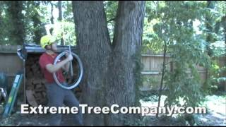 Tree Services- Cabling/Bracing by Extreme Tree Company